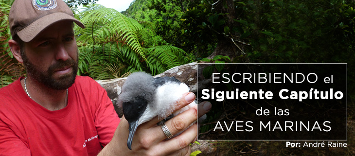 island-conservation-preventing-extinctions-andre-raine-hawaiian-seabirds-feat-spanish