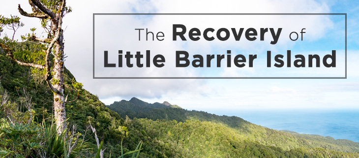 island-conservation-preventing-extinctions-little-barrier-island-richard-griffiths-feat
