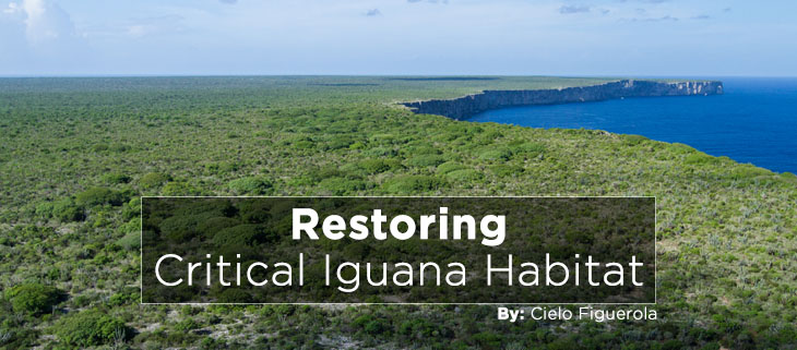 island-conservation-preventing-extinctions-restoring-mona-island-iguana-habitat-feat