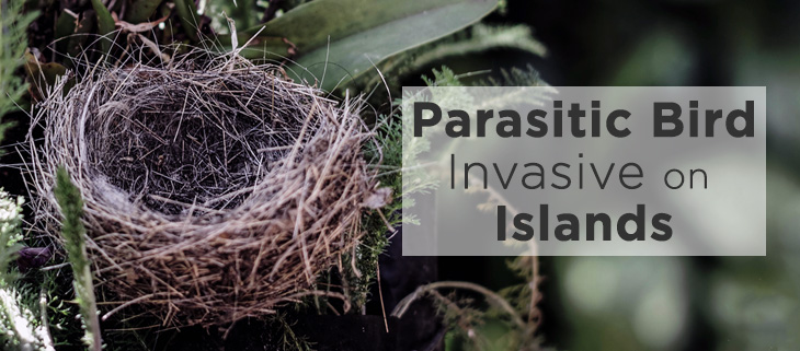 island-conservation-whydah-parasite-bird-empty-nest-feat