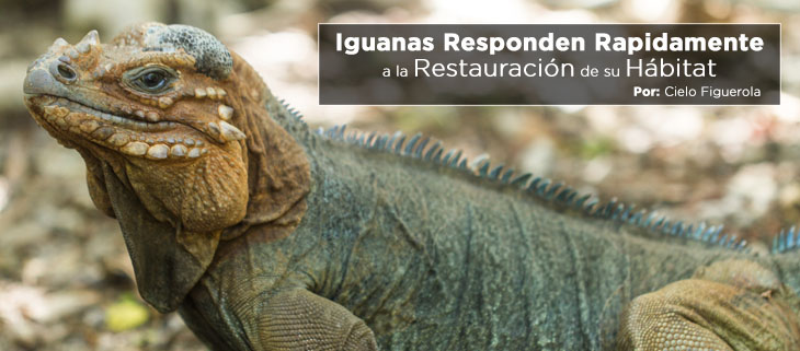 island-conservation-preventing-extinctions-mona-island-iguanas-feat-espanol