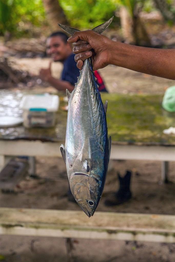 island-conservation-preventing-extinctions-palau-fish