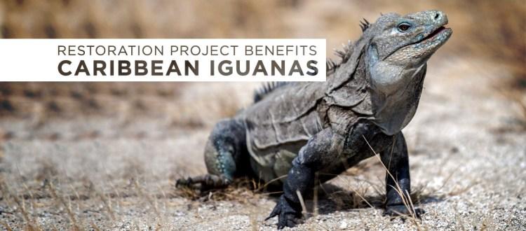 Francisco Javier Tadeo Domínguez Britto island Conservation caribbean dominican republic cabritos iguanas