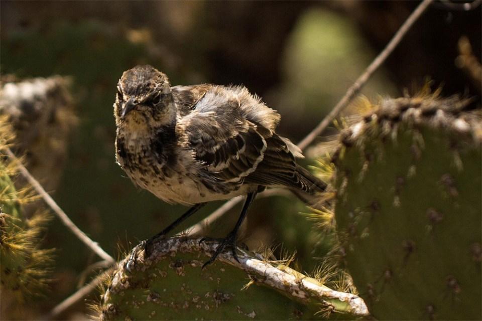 island-conservation-floreana-predator-free-new-zealand