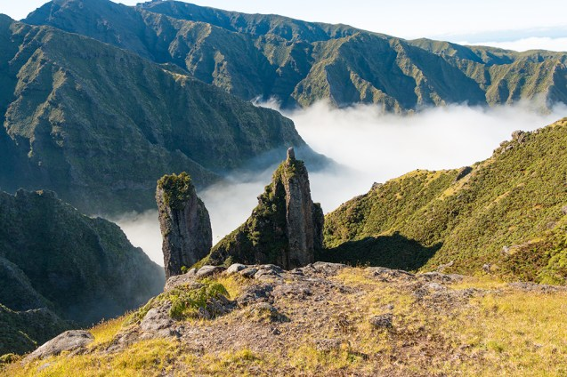 Foggy Valley, Isla Selkirk. Credit: Christian López/Island Conservation