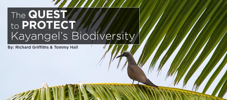 island-conservation-preventing-extinctions-kayangel-biodiversity-palau-feat