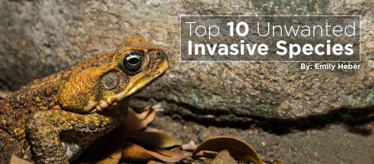 island-conservation-invasive-species-top-ten-feat