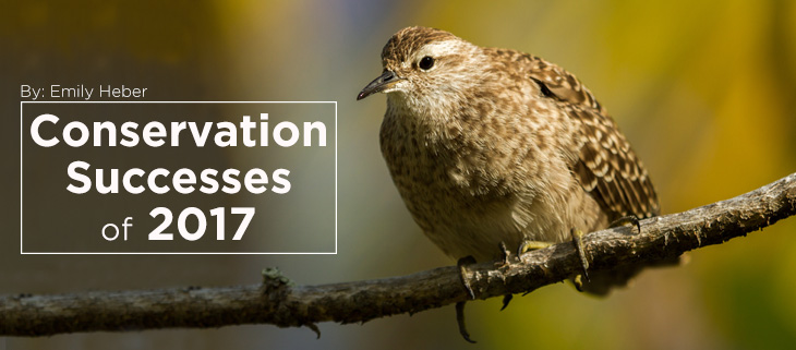 island-conservation-success-2017-feat