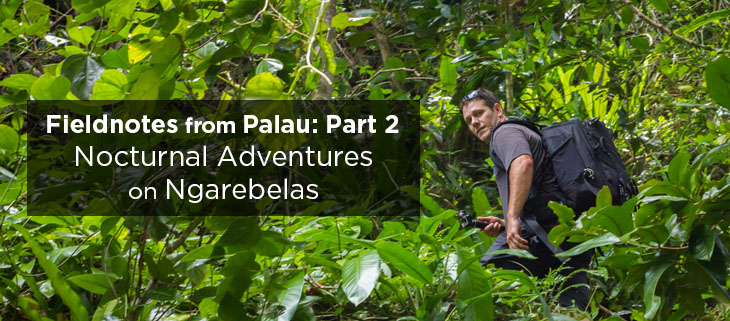 island-conservation-preventing-extinctions-fieldnotes-palau-ngarebelas-feat