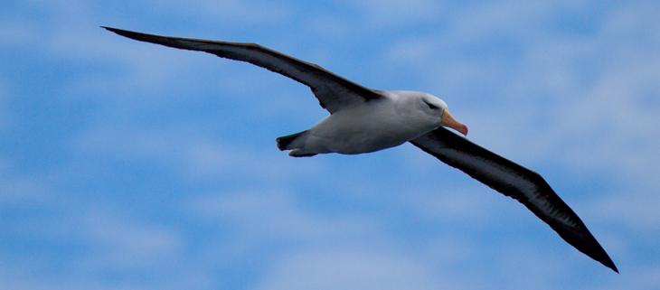 island-conservation-invasive-species-preventing-extinctions-biodiversity-extinction-seabirds-feat
