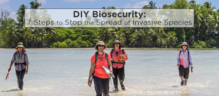 island-conservation-invasive-species-preventing-extinctions-palmyra-atoll-biosecurity-feat