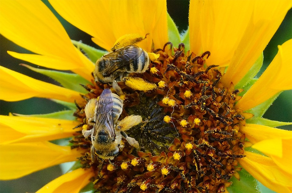 island-conservation-invasive-species-preventing-extinctions-pollination
