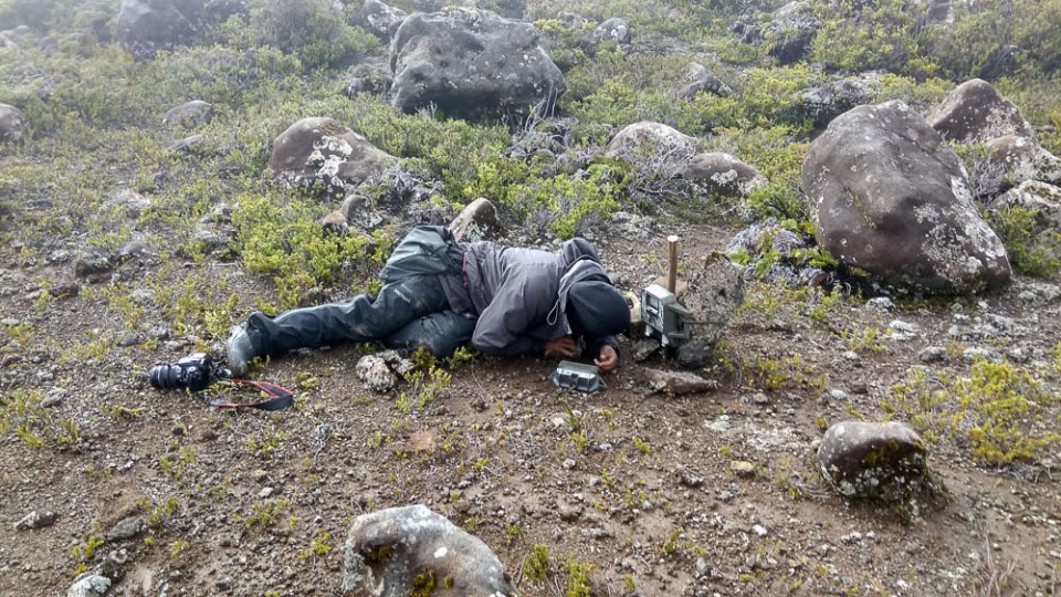 island-conservation-preventing-extinctions-invasive-species-confirming-zero