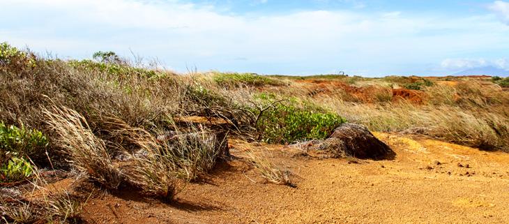 island-conservation-invasive-species-preventing-extinctions-kahoolawe-restoration