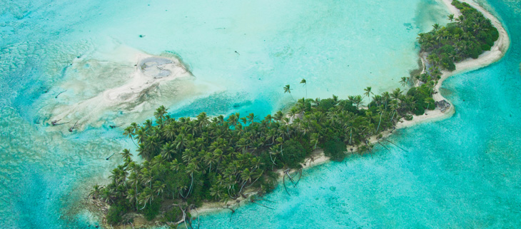 island-conservation-preventing-extinctions-invasive-species-Palmyra-Atoll-Feat