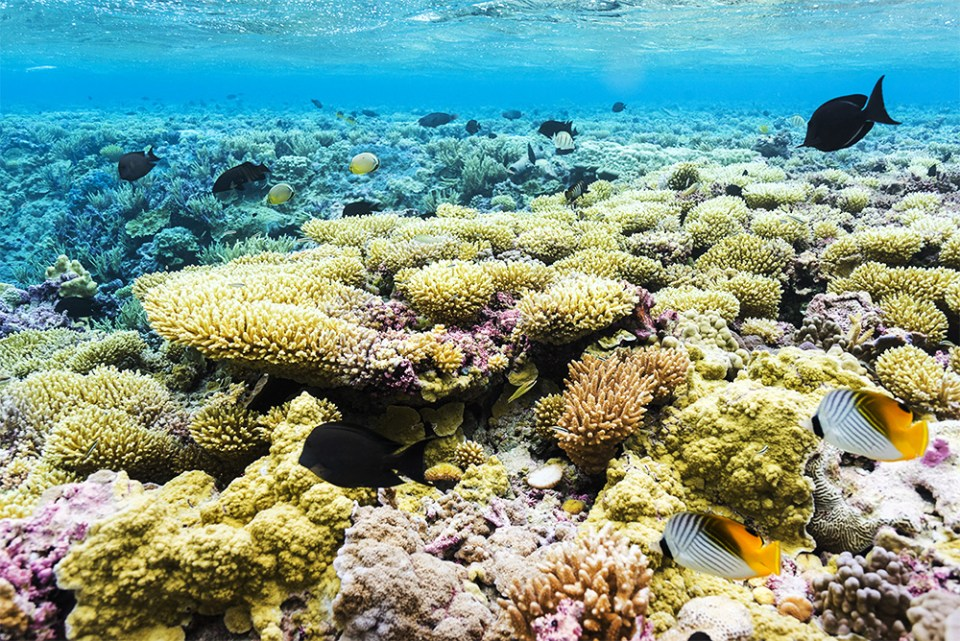 island-conservation-invasive-species-preventing-extinctions-palmyra-atoll-coral-reefs-WIRED-nick-holmes