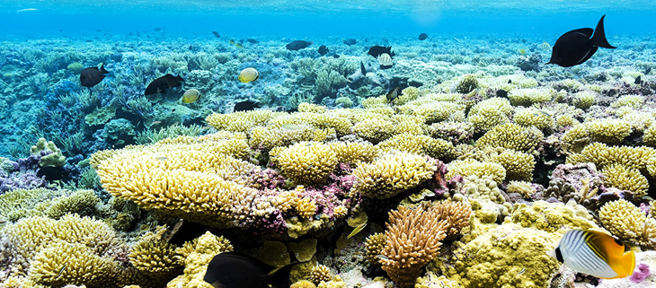 island-conservation-invasive-species-preventing-extinction-coral-reefs-palmyra-atoll-feat