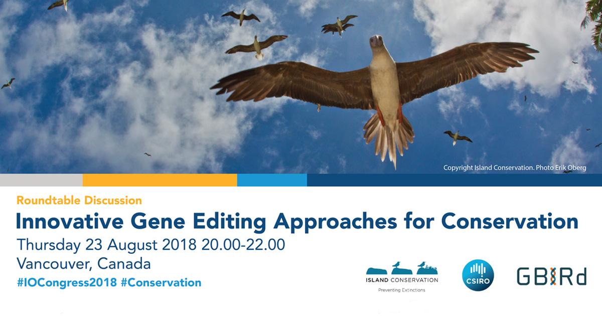 island-conservation-invasive-species-preventing-extinctions-international-ornithological-congress-genetic-biocontrol-invasive-rodents-program