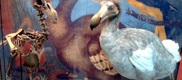 island-conservation-invasive-species-preventing-extinctions-dodo-extinction