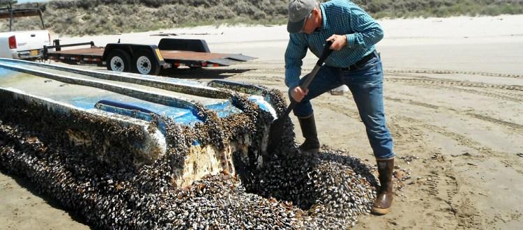 island-conservation-invasive-species-preventing-extinctions-invasive-species-travel-tsunami-debris