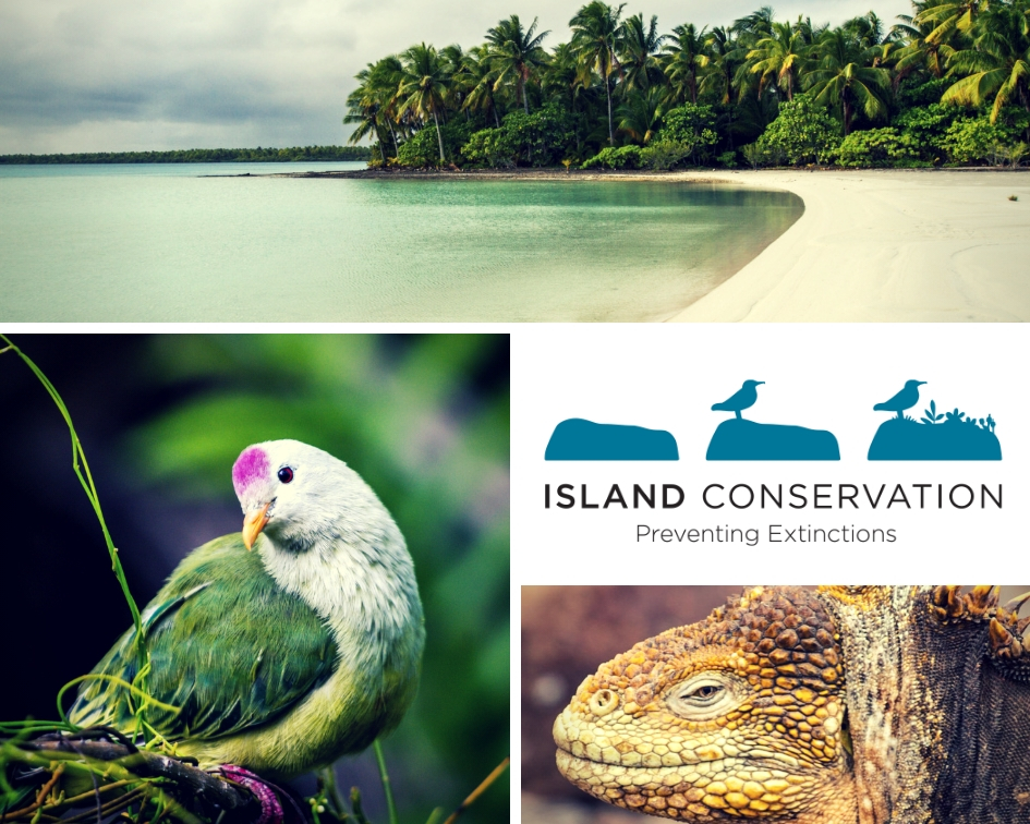 island-conservation-invasive-species-preventing-exinctions-Global-Island-Partnership-glispa-partners