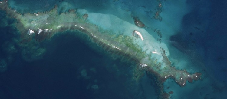 island-conservation-invasive-species-preventing-extinctions-east-island-climate-change-conservation