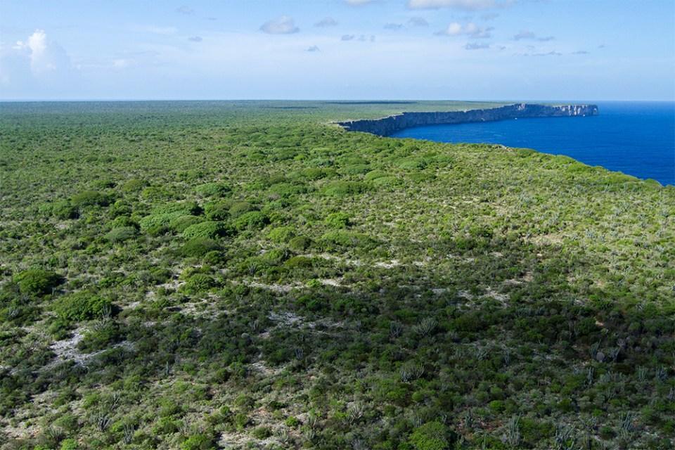 island-conservation-invasive-species-preventing-extinctions-greensboro-science-center-mona-island-landscape