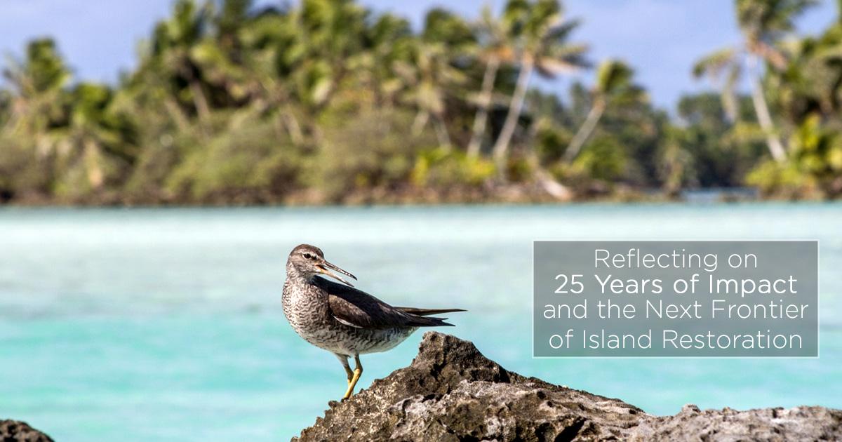island-conservation-invasive-species-preventing-extinctions-next-frontier-island-restoration