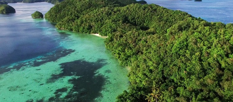 island-conservation-invasive-species-preventing-extinctions-ngeanges-palau-aerial-view-feat