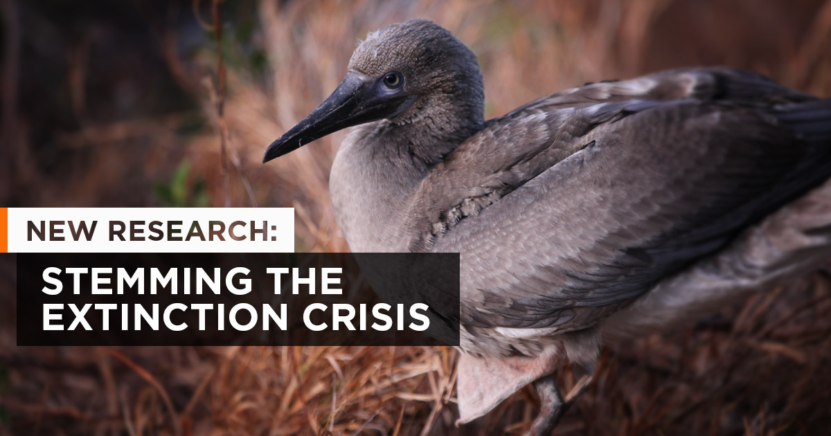 Island-conservation-preventing-extinctions-science-research-nick-holmes-extinction-crisis