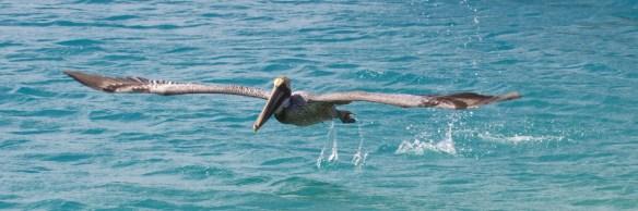 dry tortugas np  019