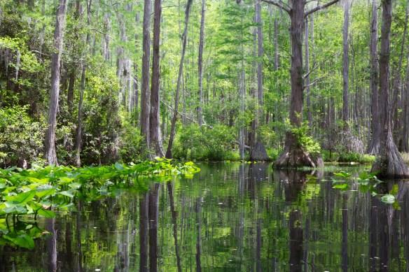 Swamp 008