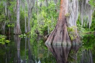 Swamp 015