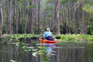 Swamp 028