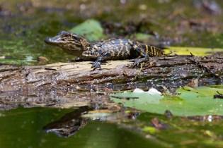 Swamp 034