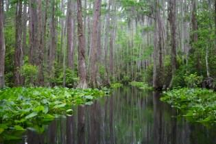 Swamp 036
