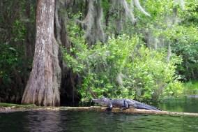 Swamp 057