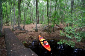 Swamp 060