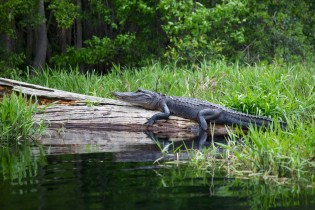 Swamp 066