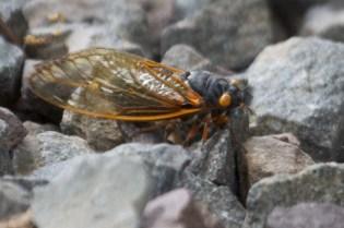 bug  001