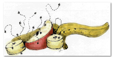 Fruit-Fly-Banana-Sketch-Cartoon