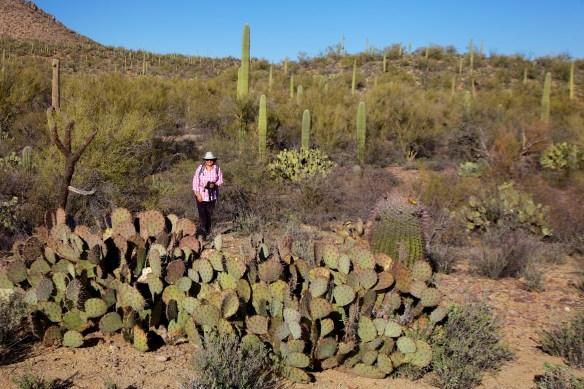 Tucson  041