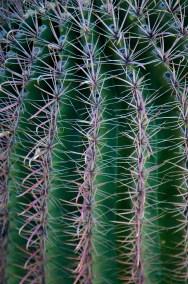 Tucson  045