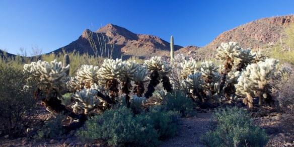 Tucson  048