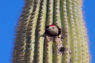 Tucson  065