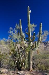 Tucson  102