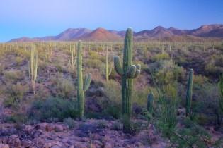 Tucson  115