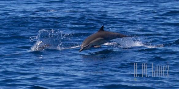 Whales SD  070
