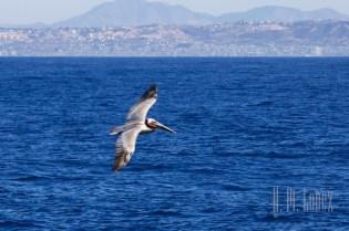 Whales SD  080