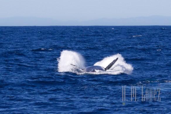 Whales SD  090